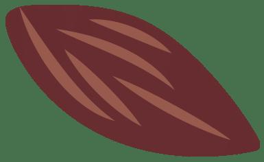 fêve de cacao