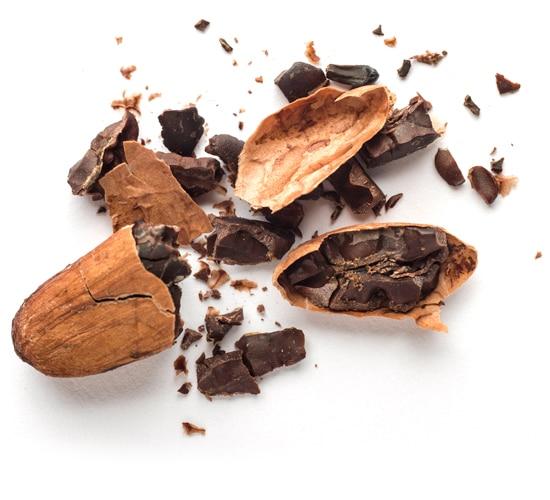 Fêve de cacao Criollo